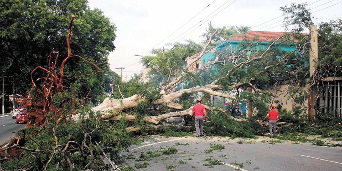 Árvore ultrapassa buraco e lidera ranking de queixas na prefeitura de SP