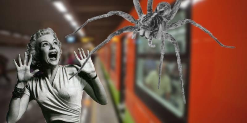La invasión de las arañas en el Metro de la CDMX