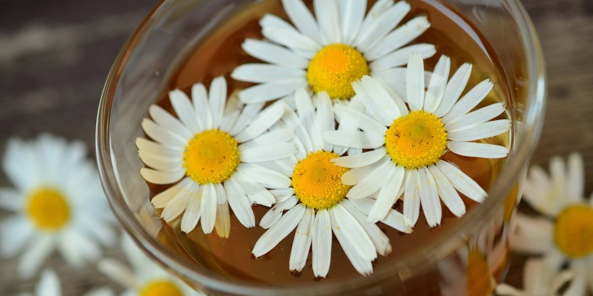 8 motivos para tomar chá de camomila; veja os benefícios de inseri-lo na dieta