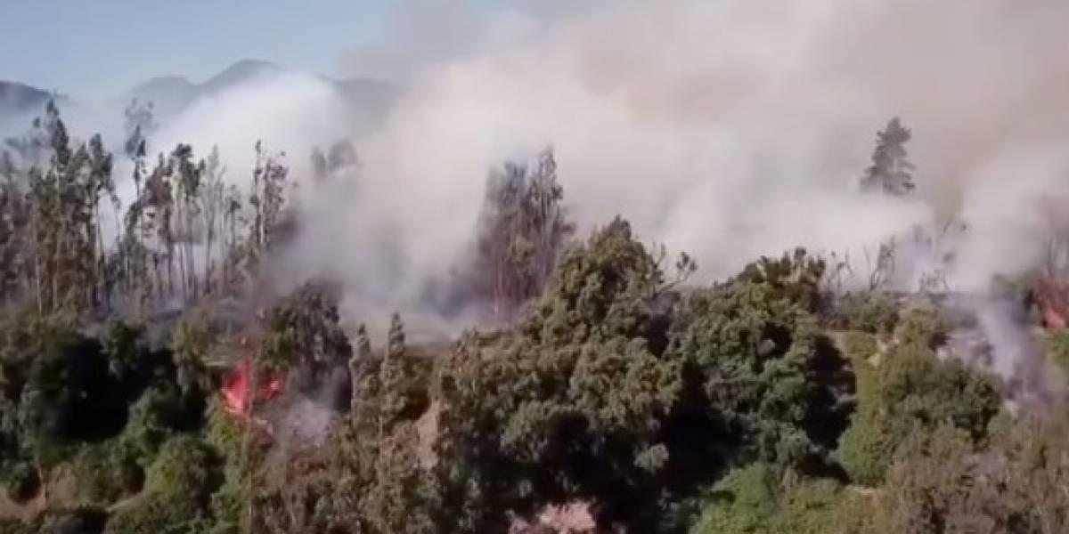 Alerta roja: incendio forestal consume más de 142 hectáreas en Machalí