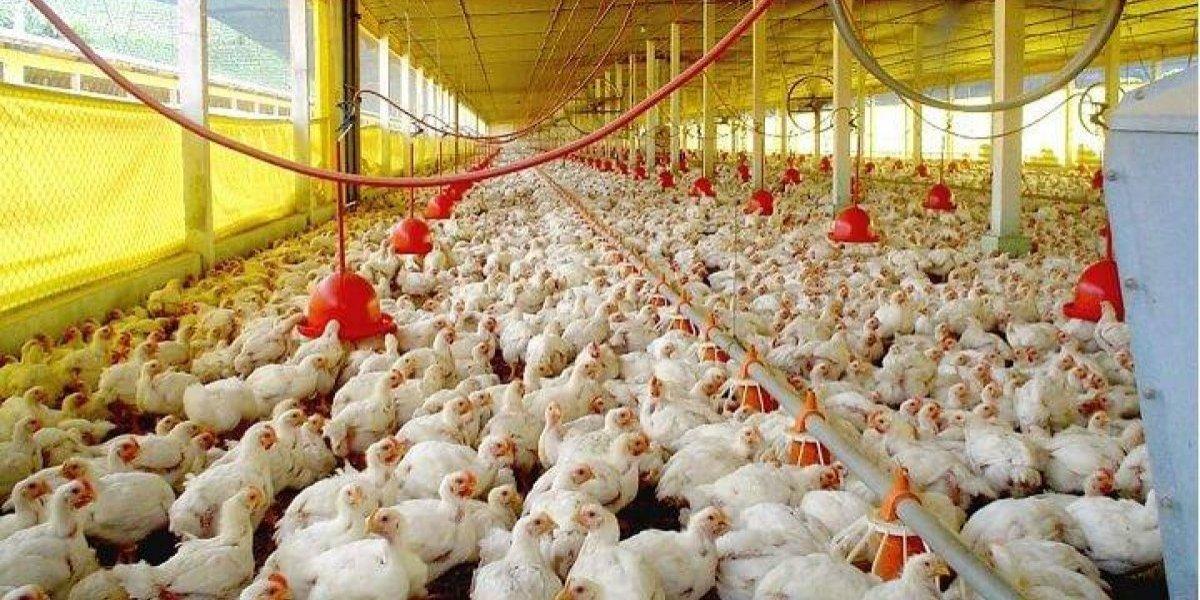 Puerto Rico emite un aviso de precaución por brote de gripe aviar en RD