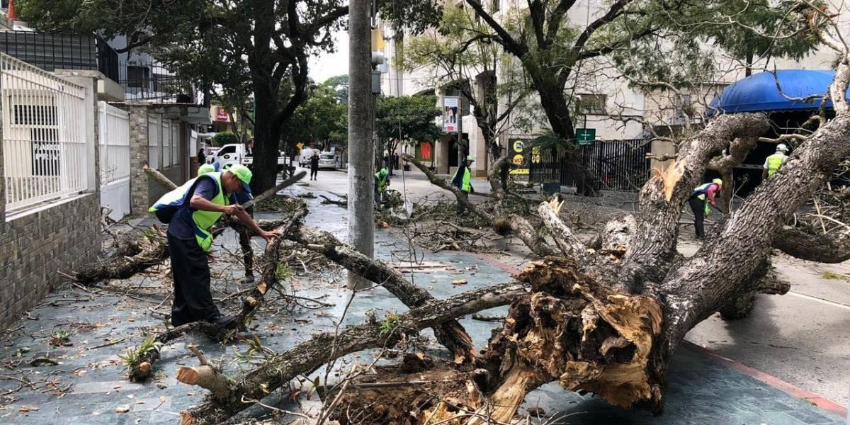 Fuertes vientos derriban árboles y vallas en diferentes municipios