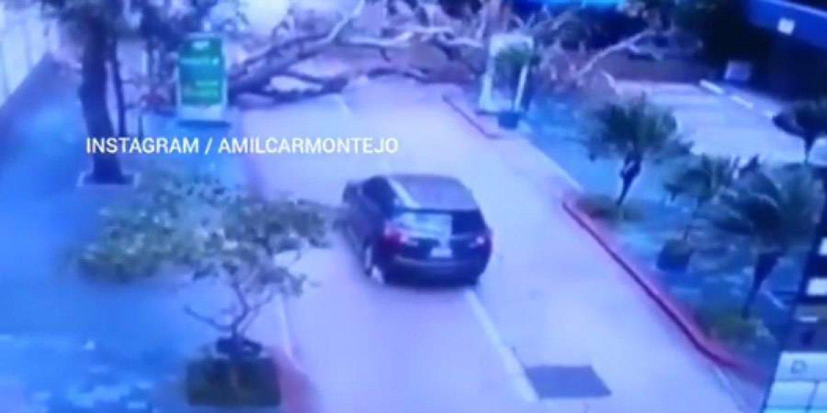 VIDEO. Vehículo se salva de que árbol le caiga encima