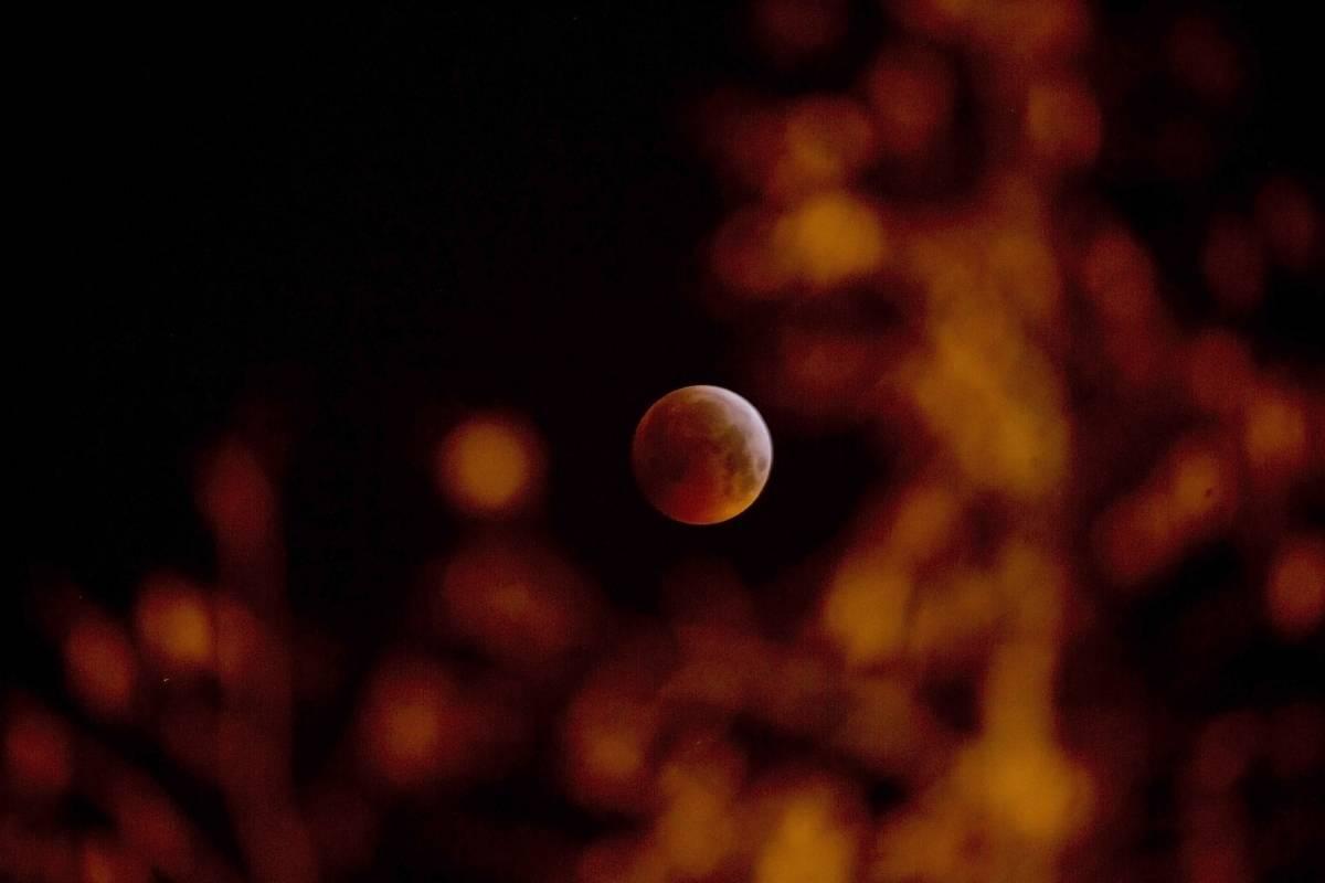 El eclipse lunar y superluna de sangre entre las ramas de un árbol en Amberes, Bélgica, el lunes 21 de enero de 2019. (Foto AP / Virginia Mayo)