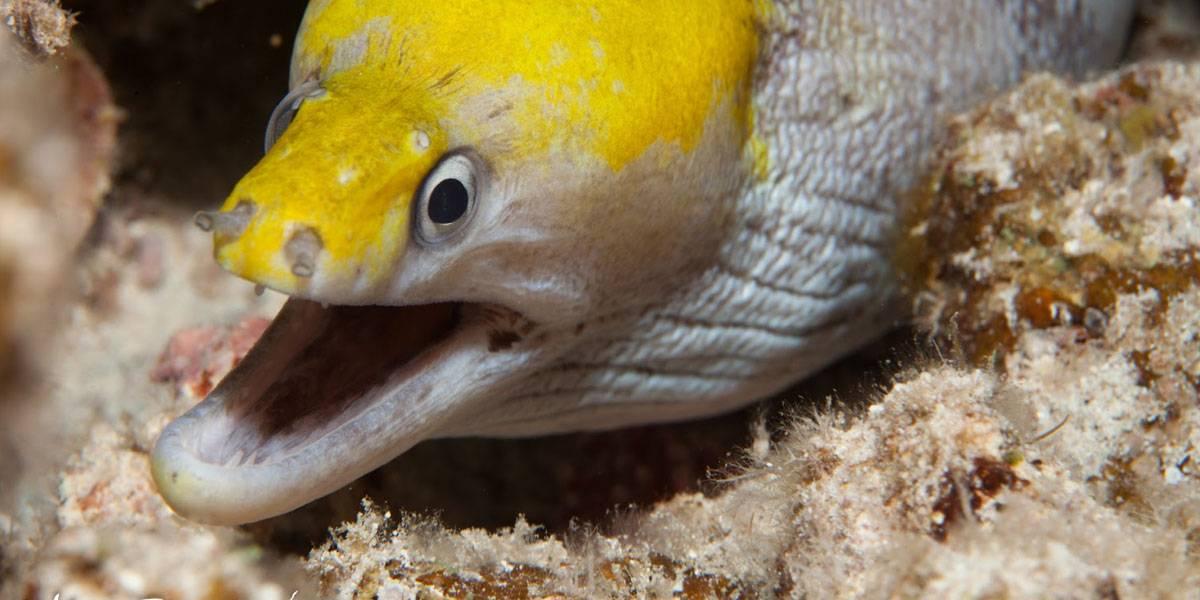 Qué pasón: hay tanta cocaína en el Támesis que las anguilas viven alteradas