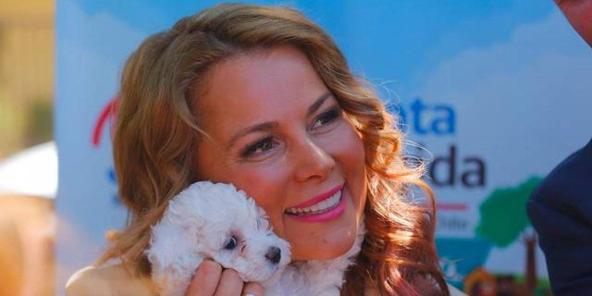 "Cathy Barriga se coronó como ""la única alcaldesa K-pop de Chile"""