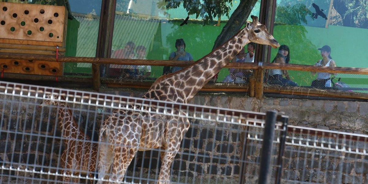 Corte de Santiago condena al Zoológico por herida a niño por mal estado de acera