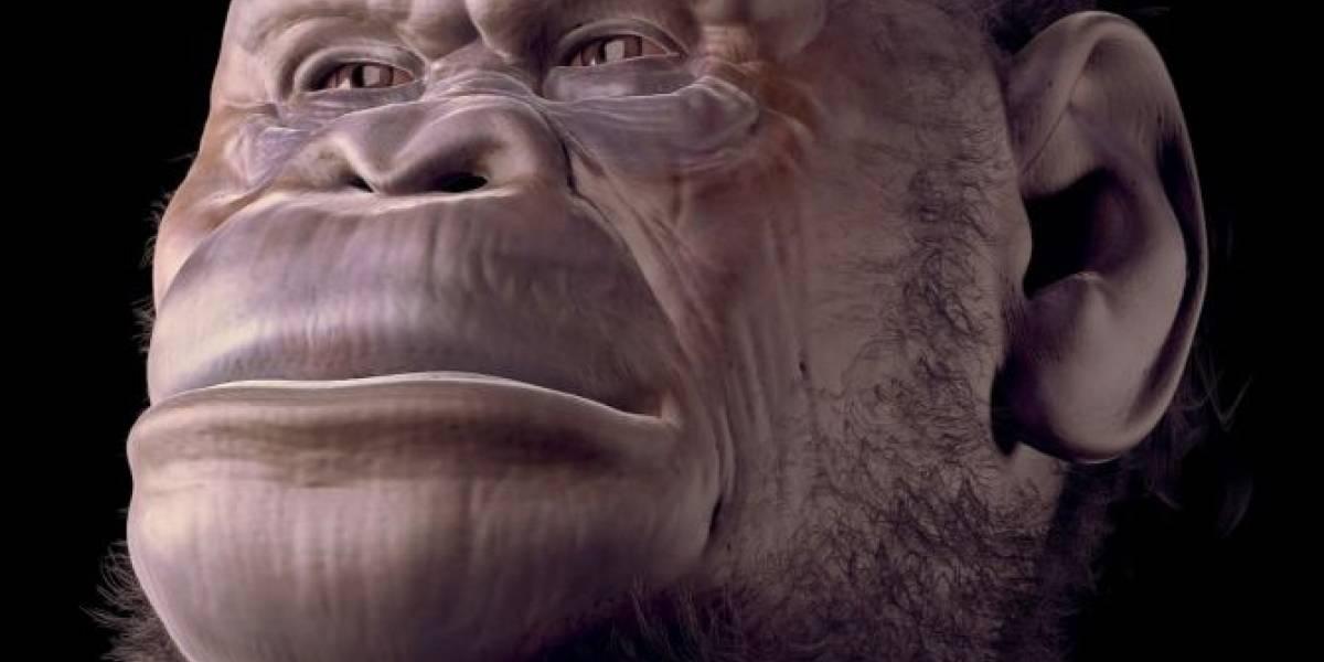 Ciencia: Encuentran fósil que podría ser el eslabón perdido del ser humano