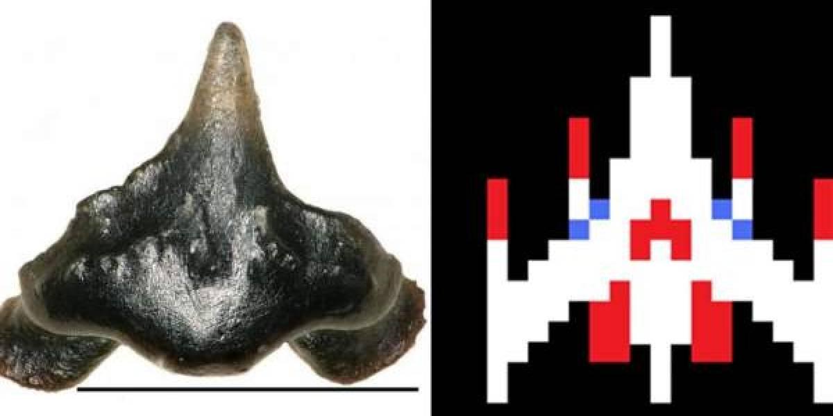Encuentran los restos de un tiburón prehistórico y lo bautizan en honor a un videojuego