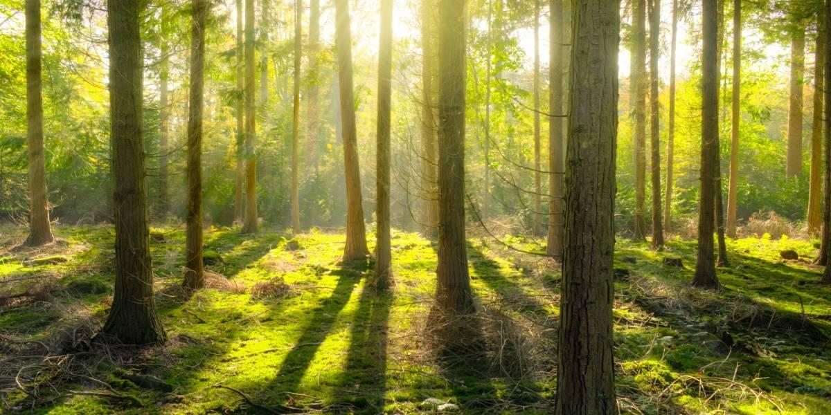 Los bosques tardarían mucho más de lo que creemos en recuperarse de serios daños como talas o incendios