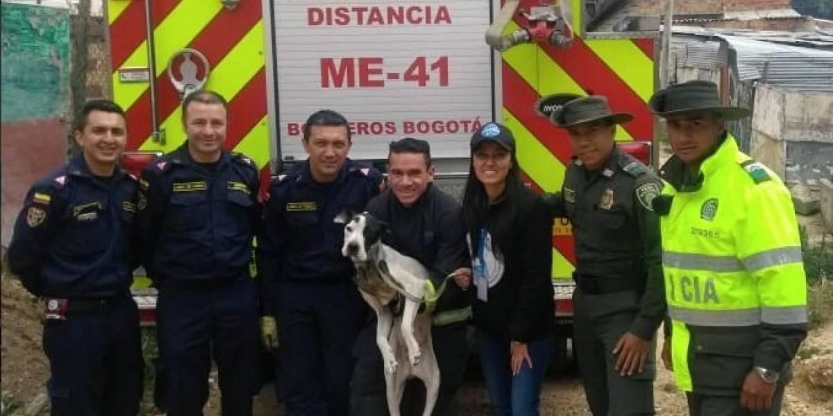 Rescatan perrito que llevaba dos meses encerrado en una vivienda de Bogotá