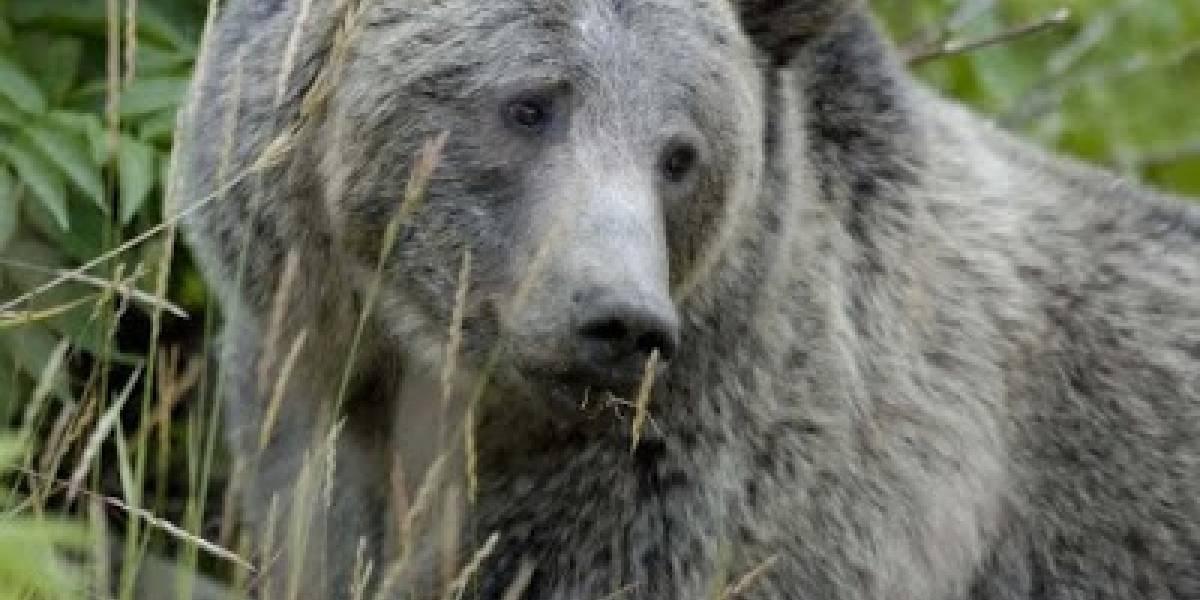Animales de México que se encuentran extintos hoy en día
