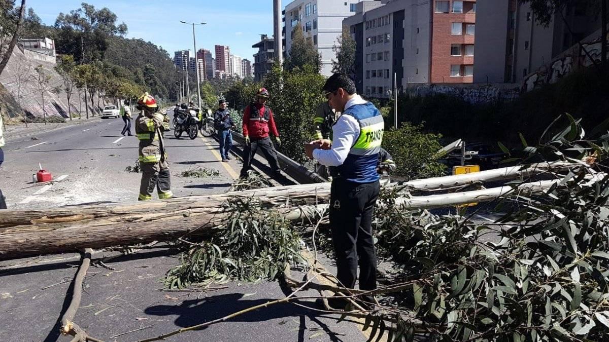 Se cayó un árbol sobre la avenida