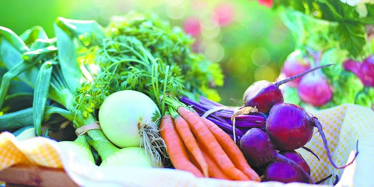 Saiba como cultivar uma horta em sua casa