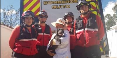 Bomberos rescataron a perrito de quebrada en barrio Vista Hermosa
