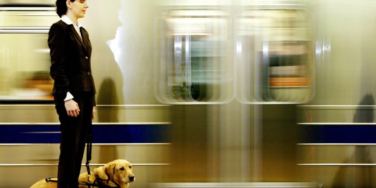 Governo libera transporte de animais no Metrô, CPTM e EMTU; veja regras