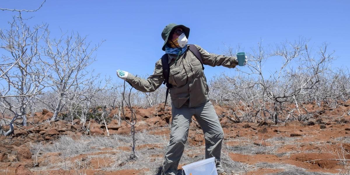Reabren sitio de visita tras desratizar isla Seymour Norte, en las Galápagos
