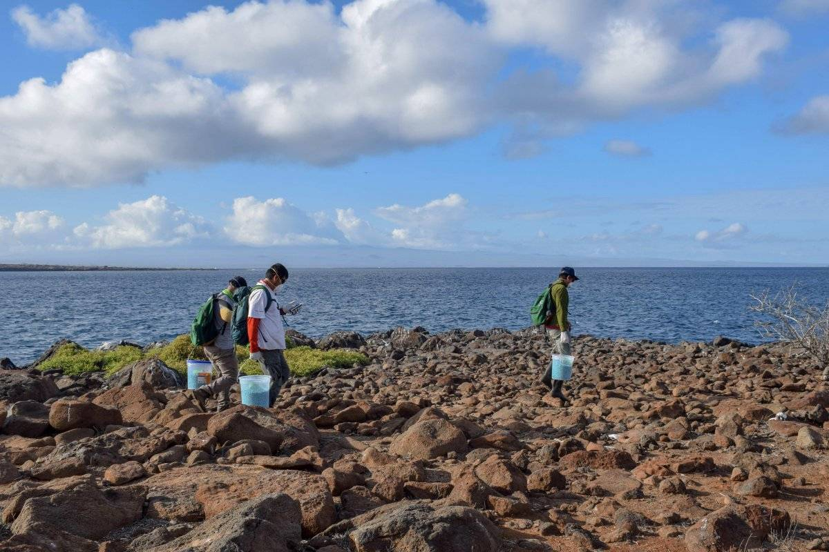 Ecuador implementa proyecto para erradicar roedores en una isla de Galápagos