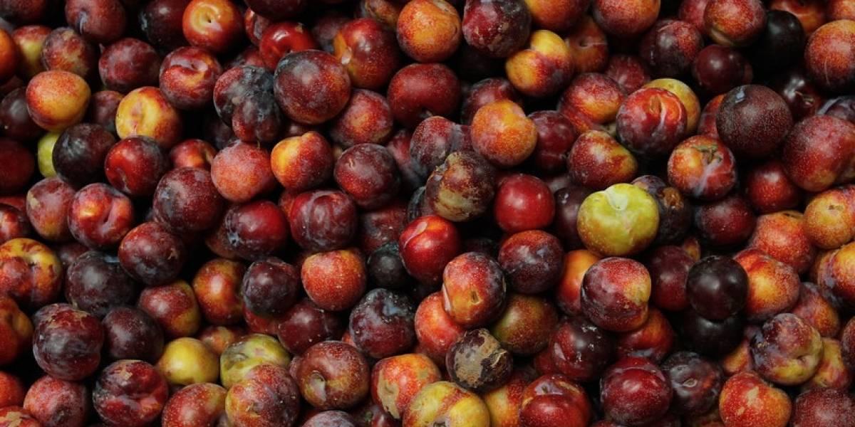 Estados Unidos retira del mercado tres productos frutícolas chilenos: presuntamente estaban contaminados de listeria