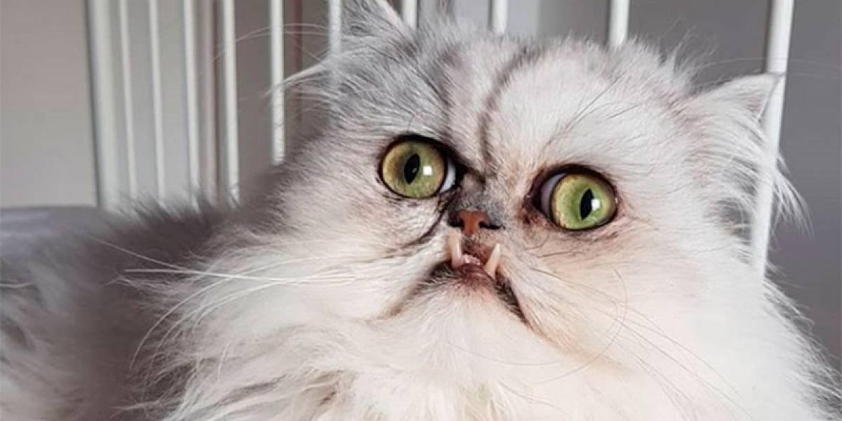 Según la ciencia, gatos prefieren cariño antes que comida