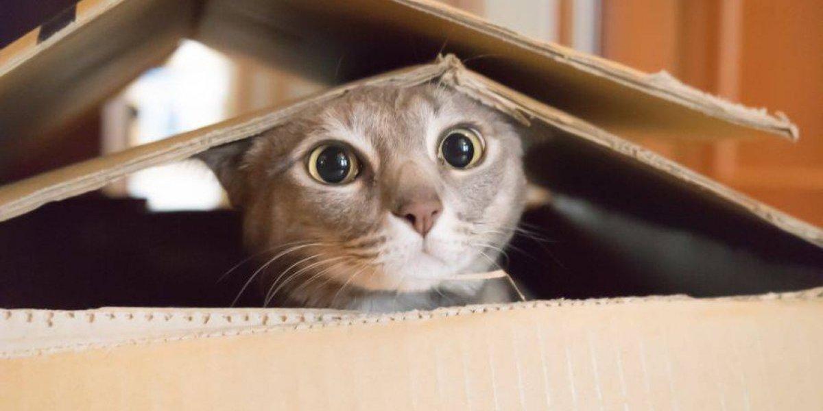 Gatos caníbales: informe acusa al gobierno de EEUU de comprar felinos y perros para dárselos como comida a gatos de laboratorio en perturbadores experimentos