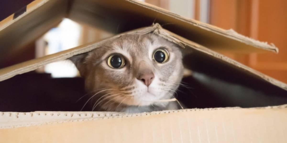 Cómo no amarlos: estudio revela que gatos sí quieren a los humanos incluso más que a la comida