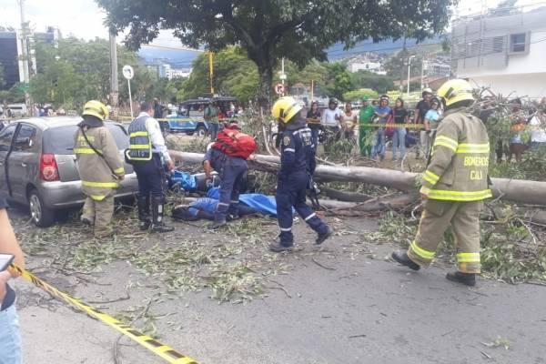 árbol que mató a un motociclista
