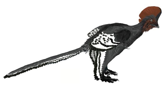Hallazgo de fósil podría ayudar a explicar en qué momento las aves empezaron a volar