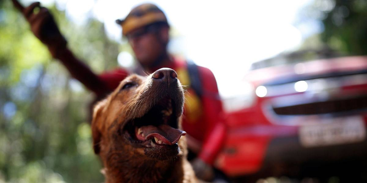 Brumadinho: Cachorros auxiliam bombeiros nas buscas