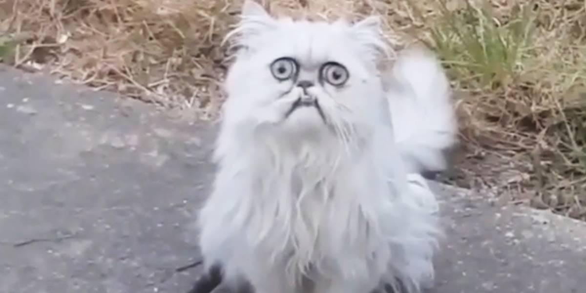 México: Luego de denuncia en Internet, Hacienda asegura vía Twitter que no matará a los gatos de Palacio Nacional