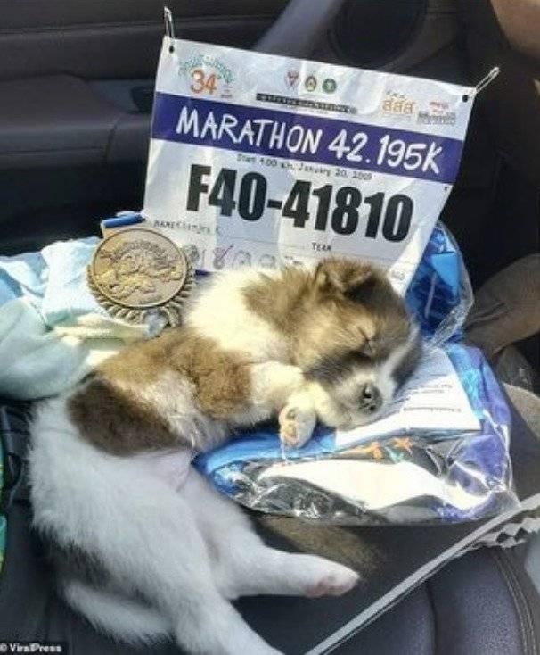 Perro rescatado en maratón