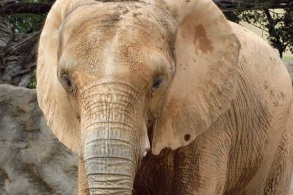 elefanta Mundi