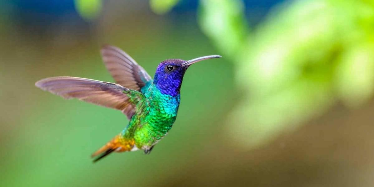Los colibríes en México se están acabando debido a un ritual de brujería