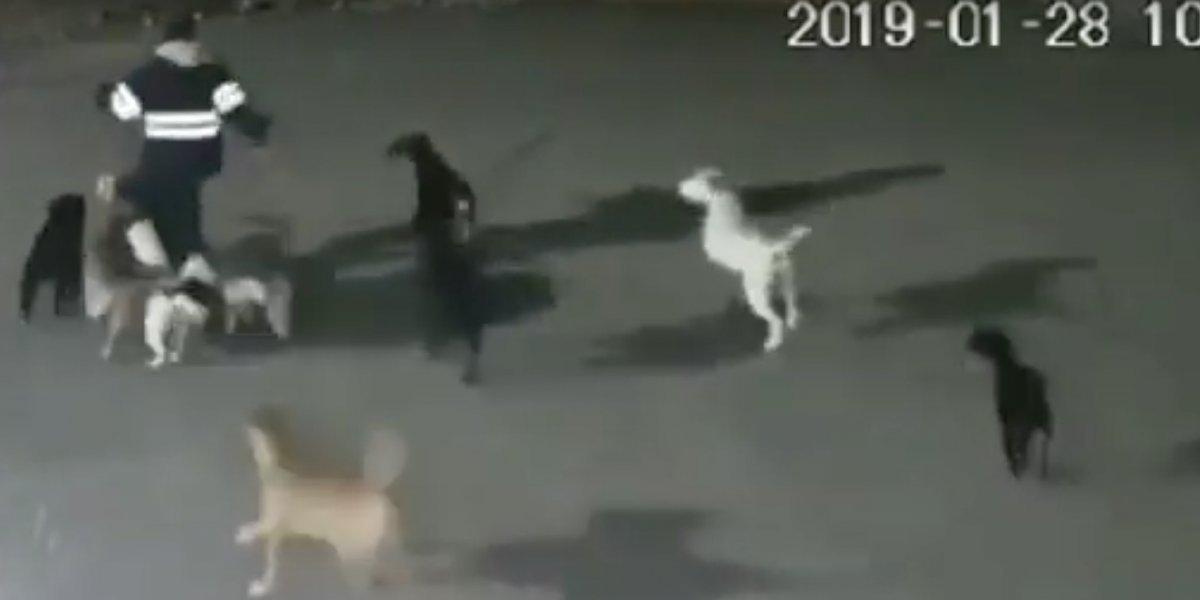 Mujer muere tras ataque de 10 perros en México