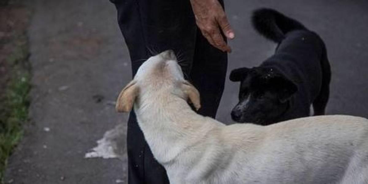 La persona a la que le dieron permiso laboral para cuidar de su mascota