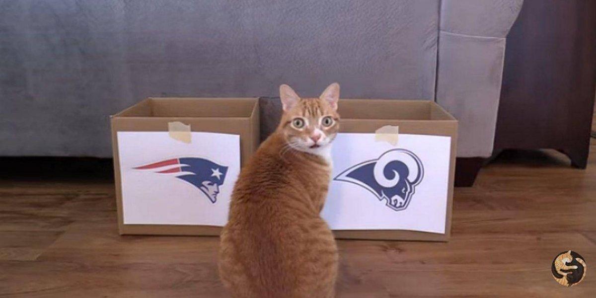 Gatos vaticinan al ganador del Super Bowl 2019 en un divertido video