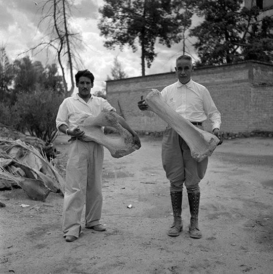 Paleontólogos con huesos de mamut. Foto: Cortesía INAH