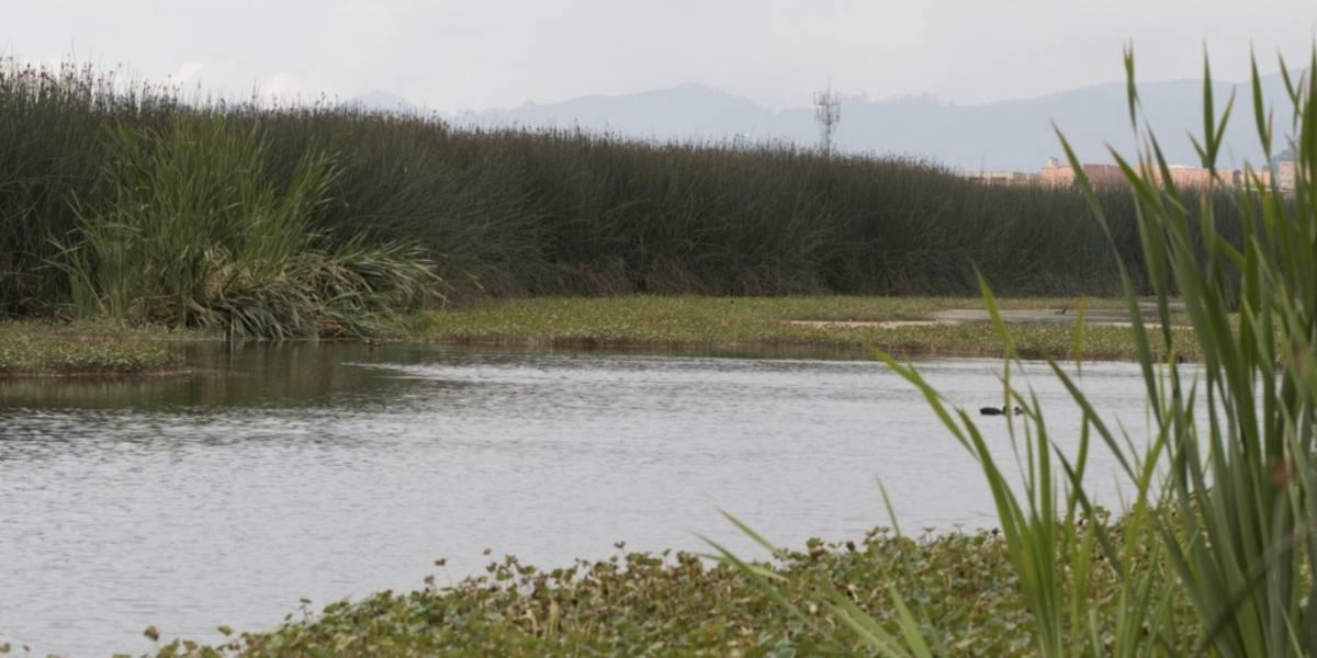 Los tétricos hallazgos que se hicieron en el Día de los Humedales en Bogotá