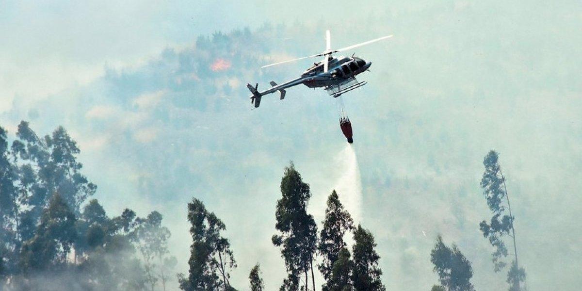 Alerta roja en Ancud: incendio forestal consume 250 hectáreas de vegetación