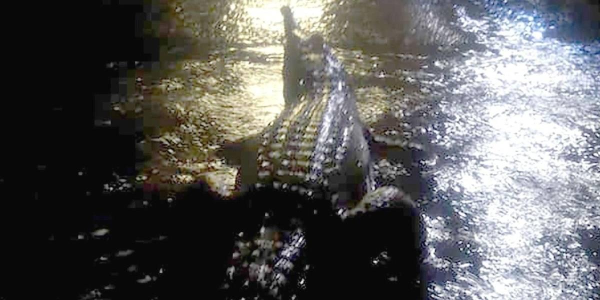 Inundaciones dejan las calles de Australia con cocodrilos