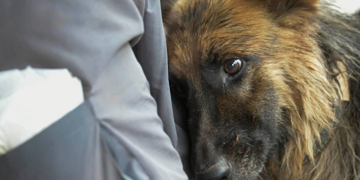 350 animais já foram resgatados da lama de Brumadinho