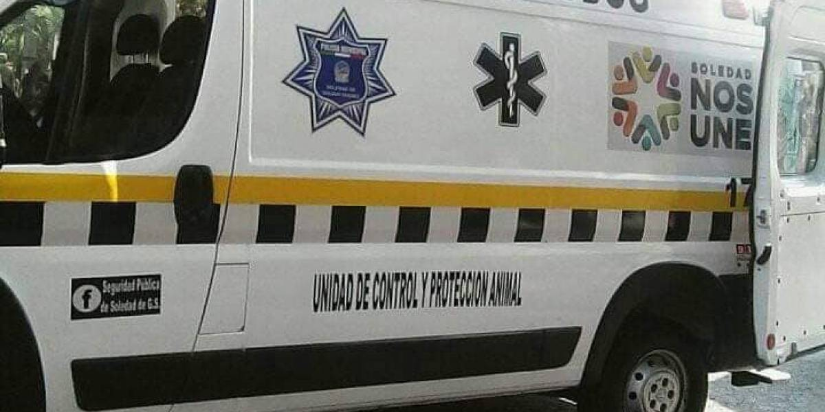 México crea la Ambudog: La primera ambulancia para animales de la calle