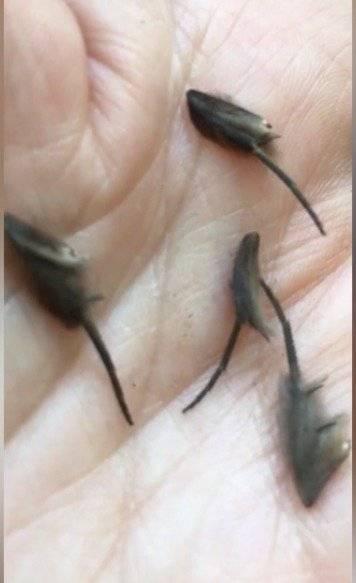 Hombre halló criaturas alienígenas en la cocina de su casa