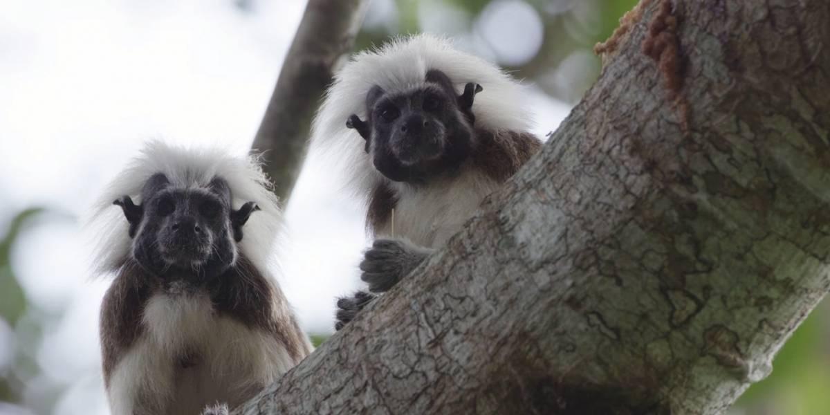 Héroes al rescate animal: la lucha por conservar la fauna nacional