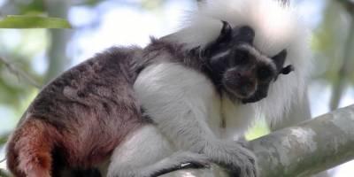 Conservación animal - Señal Colombia