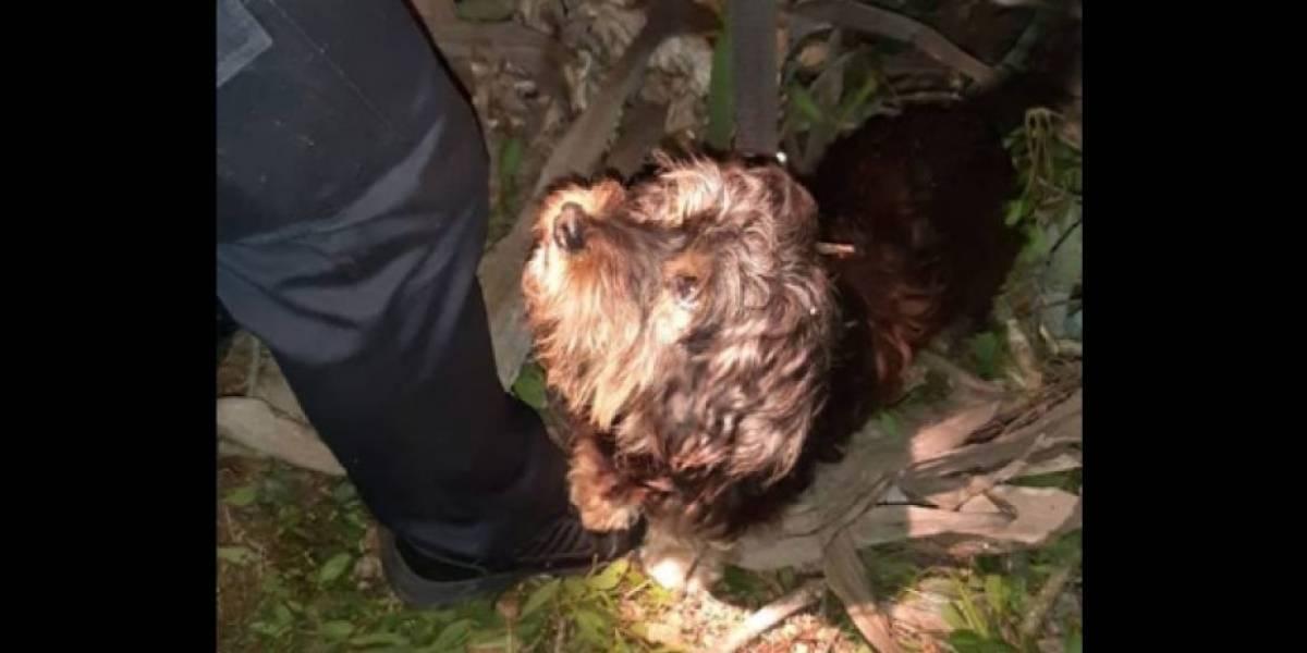 Abuelo de 81 años cayó a un barranco y fue rescatado siete horas después gracias a su perro