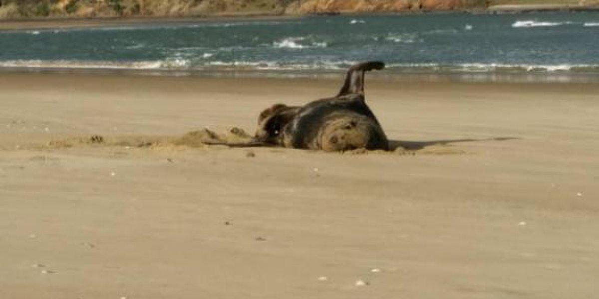 Investigadores encontraron una memoria USB en las heces congeladas de una foca: tenía fotos y videos de las vacaciones de un desconocido