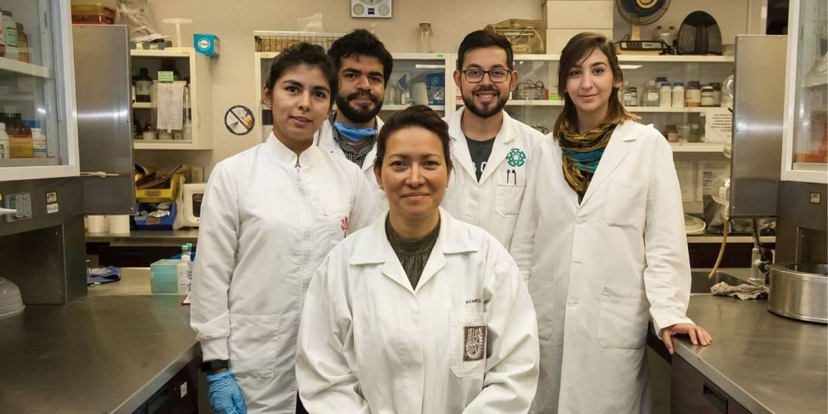 Científicos del IPN de México lograron eliminar el 100% del virus del papiloma humano en 29 mujeres