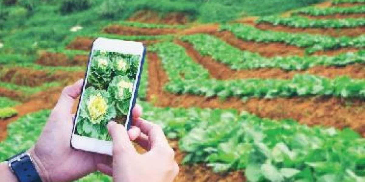 5 gadgets para tu jardín