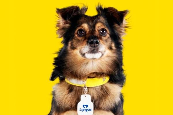 Spike, el perrito de Lipigas
